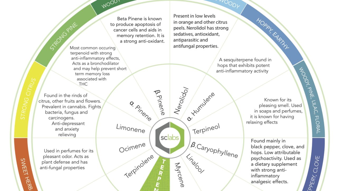 Beyond Aroma: Terpenes in Cannabis - SC Labs