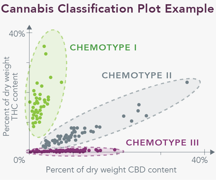 Cannabis Classification Plot Example