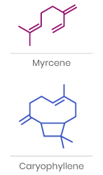Examples of Terpene Chemical Structure