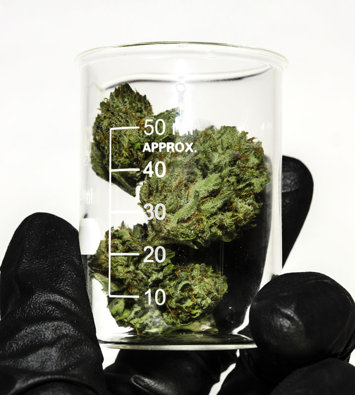 cannabis testing services - buds in beaker